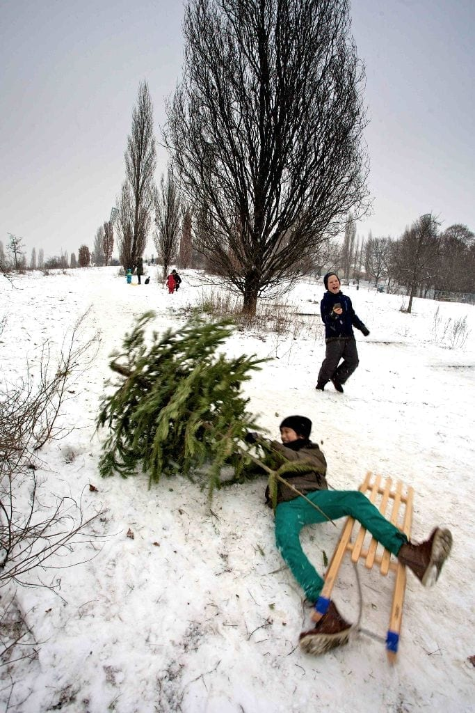 Sledging In The Mauerpark. Image by Paul Sullivan.